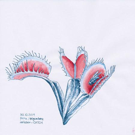 30-inktober2019-catch-w, Tuschezeichnung, 3 fleischfressende Pflanzen (Venus Fliegenfalle), eine mit einer Fliege